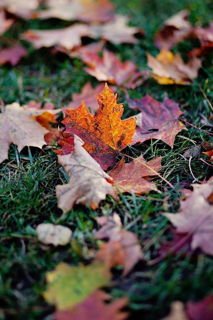 Xорошо, что есть осень, она нежно и аккуратно готовит нас к холодам.