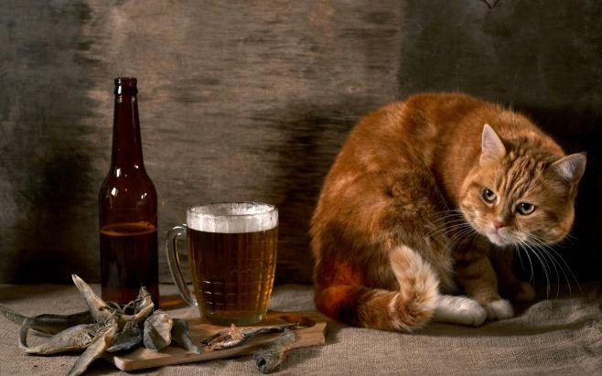 ☆ О табаке, пиве и котах ☆