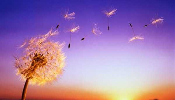Ветер и Радость