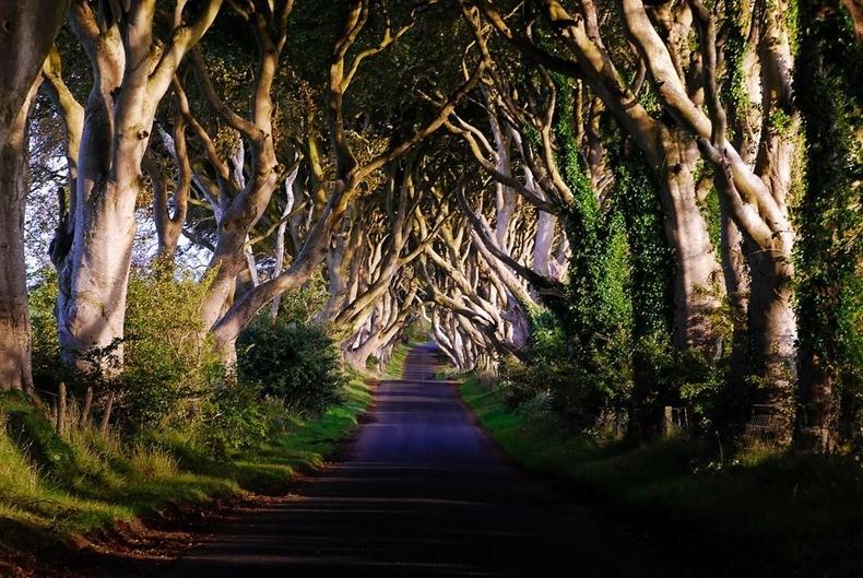 Таинственный лес или аллея буков в Ирландии ...
