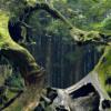 Аномальные лес Хойя-Бачу в Румынии: проклятое место или портал в иное?