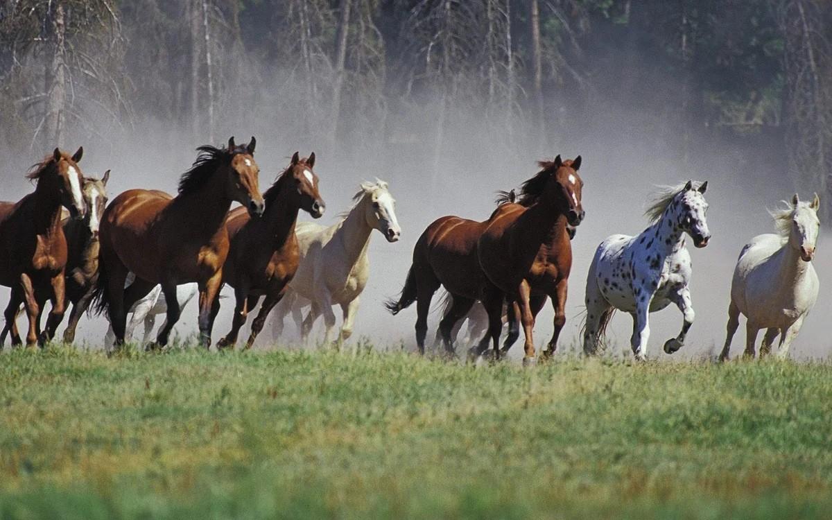 """""""17 лошадей"""" рассказ. Автор Даниил Хармс"""