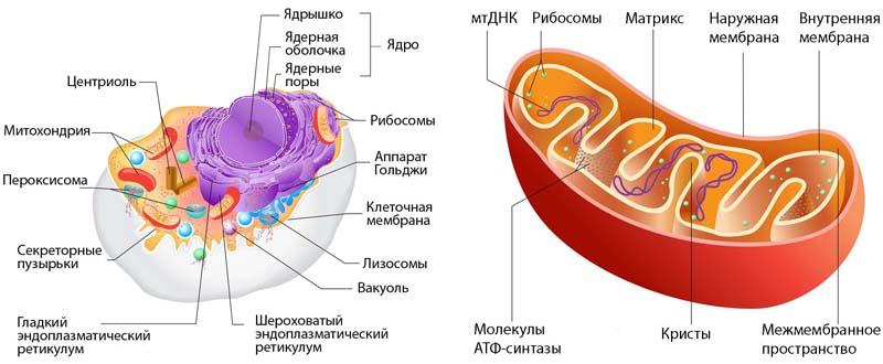 """Учёные пришли к выводу и признали тот факт, что """"Только Бог мог сотворить белки!"""""""