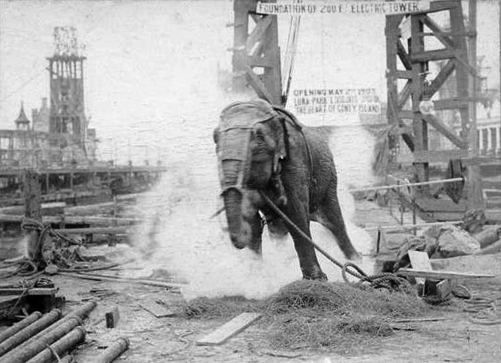 Как в 1903 году изобретатель Томас Эдисон казнил цирковую слониху Топси