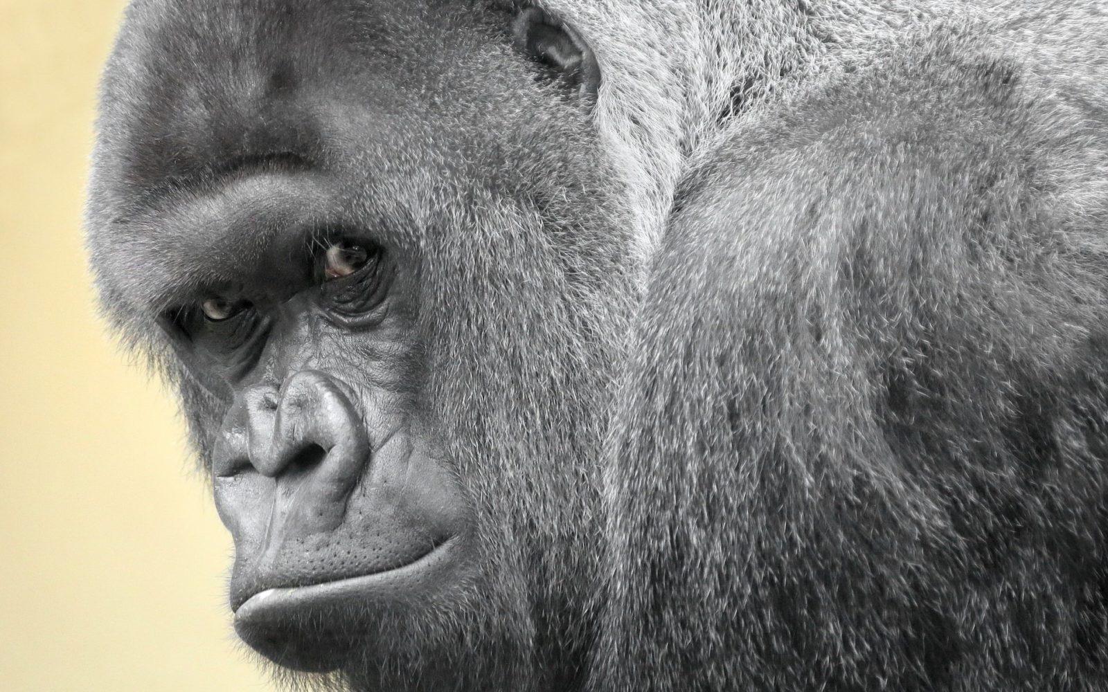 Есть ли сознание у животных: удивительные результаты экспериментов