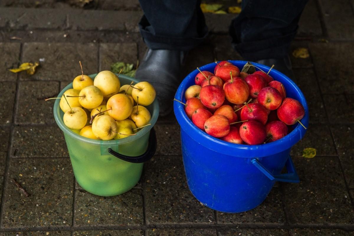 Домашние яблоки пригодятся и в компоте, и в повидле, и в настойке
