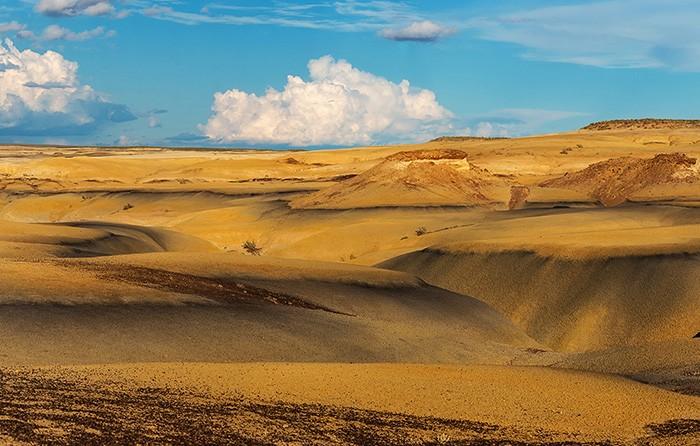 Пустыня днем.  Фото: Alex Mironyuk.