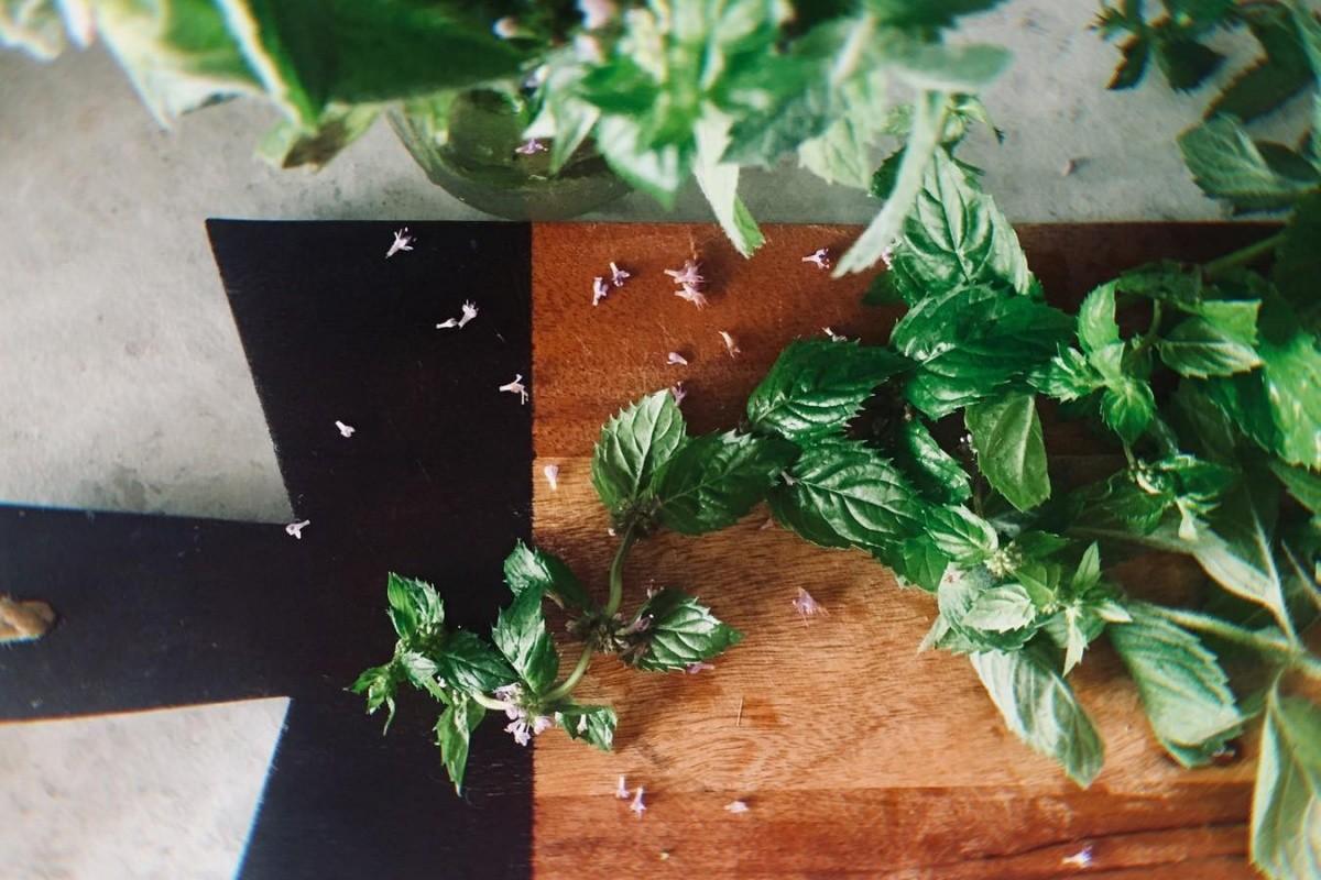 Несколько листиков мяты дадут напитку вкус и изумрудный оттенок