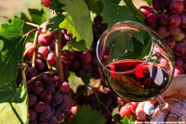 """Почему виноград """"Изабелла"""", из которого делают """"Лыхны"""" запрещён в большинстве стран"""