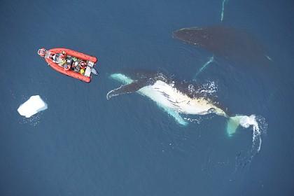 Опровергнуто существование гигантских морских чудовищ