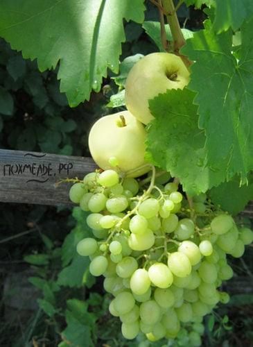 Виноградный и яблочный соки улучшают обмен веществ.