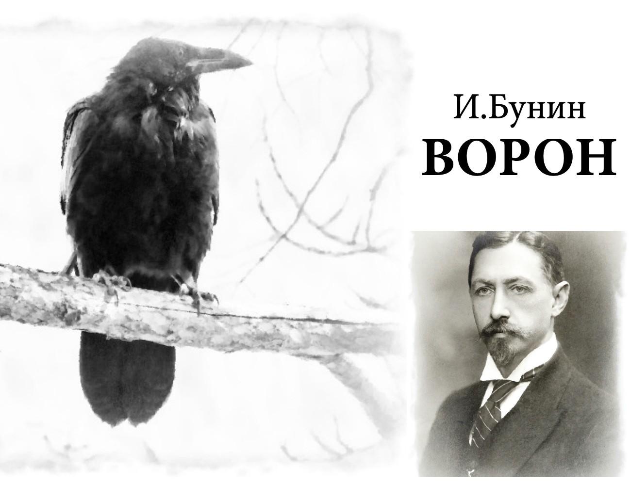 """""""Ворон"""" рассказ. Автор Иван Бунин"""