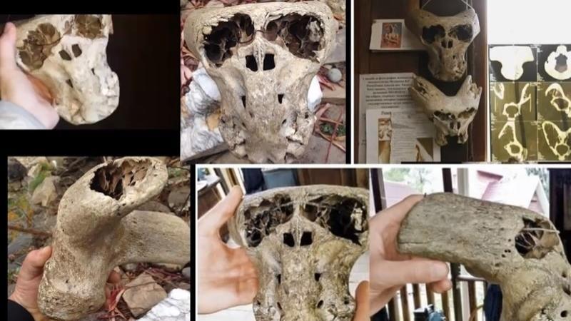 Найденный нацистский сундук с черепами пришельцев шокировал археологов.