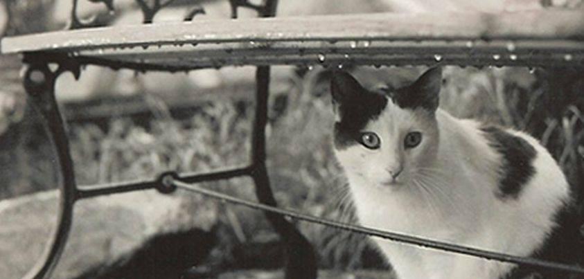 """""""Кошка под дождем"""" рассказ. Автор Эрнест Хемингуэй"""