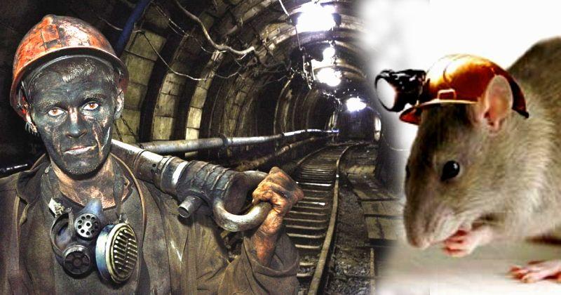 """""""... рассказал один шахтер"""" добросказ из VK"""