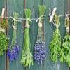 ТОП 10 самых полезных трав для здоровья