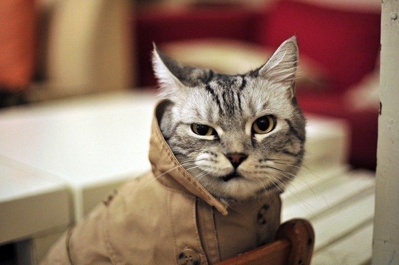 """""""Кот"""" Автор Наталия Варская. Бытовая ироническая проза"""