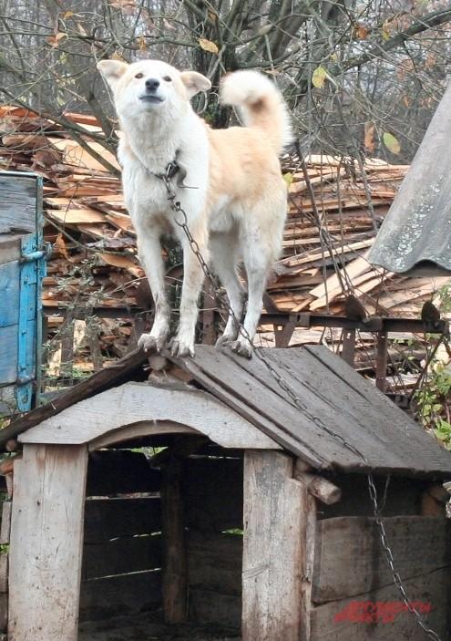Единственную собаку в Простоквашино зовут не как мультяшного персонажа — Шариком, а Бобиком
