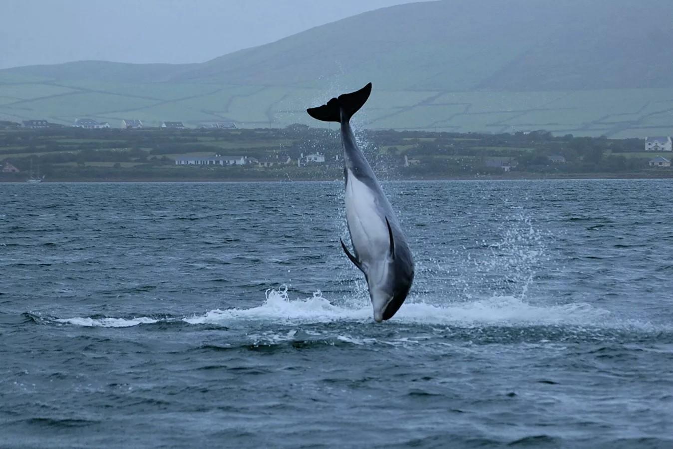 """Ирландский политик заявил о пропаже знаменитого дельфина """"из-за Путина"""""""