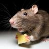 Операция-эпиляция: «Мышь» (жесть и юмор)