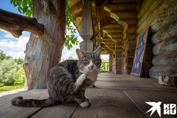 Кошек в доме много