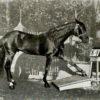 Эффект «Умного Ганса» или конь с интеллектом человека