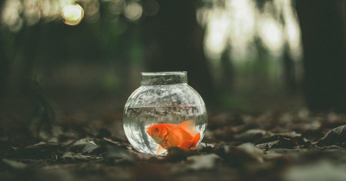 """""""Золотая рыбка"""" рассказ (постмодернизм). Автор Этгар Керет"""