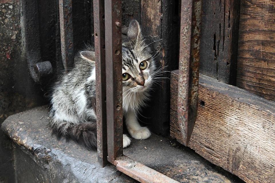 Бросая животных на даче, вы обрекаете их на мучительную смерть...