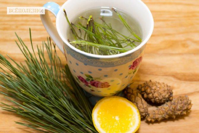 Чудо-рецепты из хвои: для здоровья и красоты