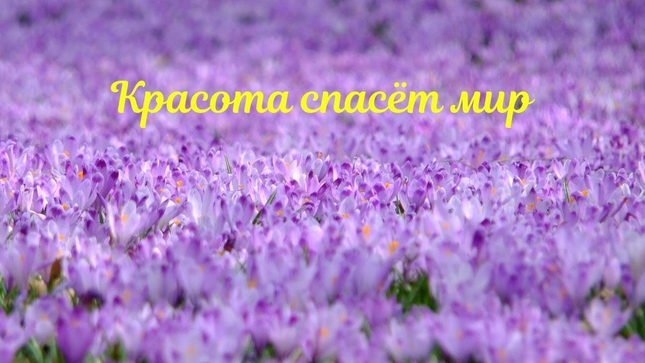 Дмитрий Раевский. Красота спасет мир