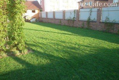 Мятликовый газон в мае