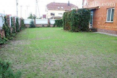 Взошедший газон из мятлика