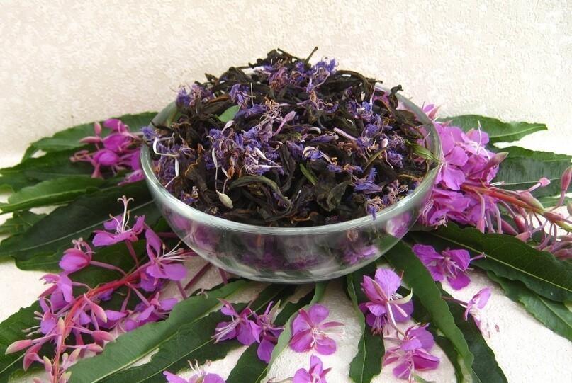 Ферментированный иван-чай – натуральный продукт для вашего здоровья