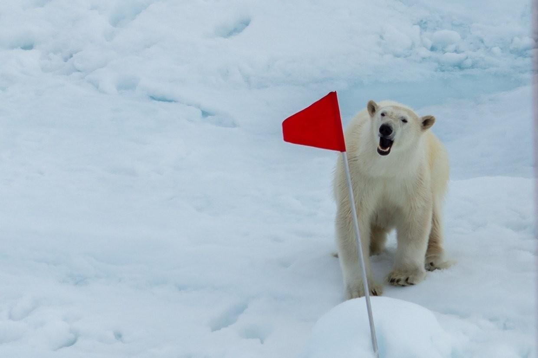 Россия первой в мире запускает цифровое шоссе в Арктике (проект на пятилетку)