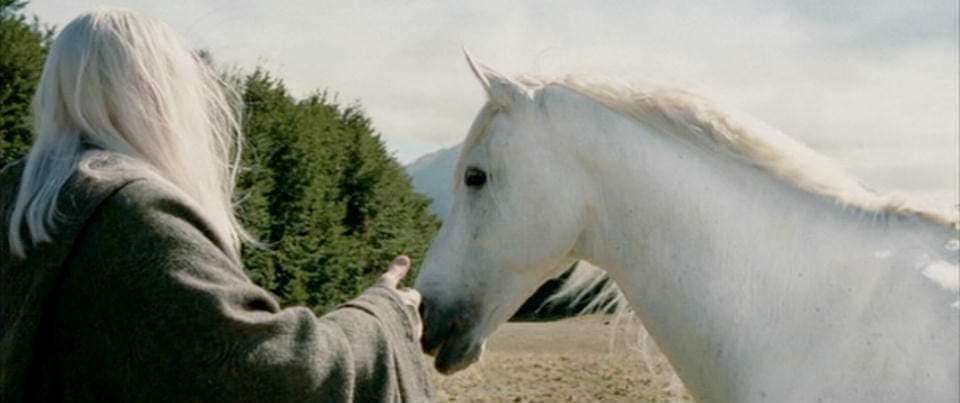 """""""Старик и белый конь"""" притча о суждениях..."""