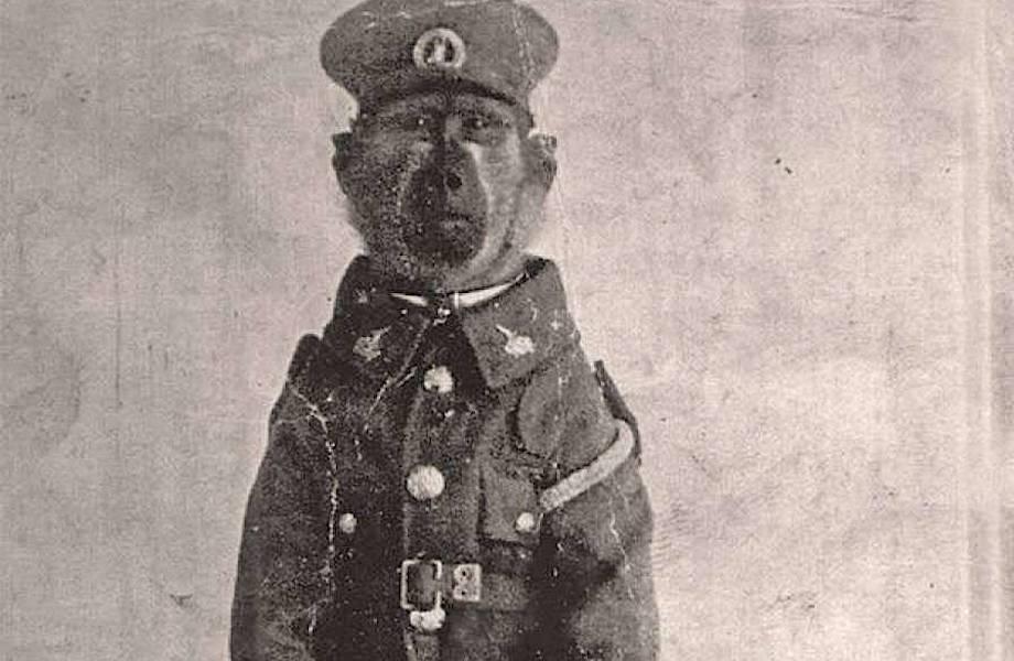 Бабуин Джек, который пошел воевать следом за хозяином и стал героем Первой мировой войны