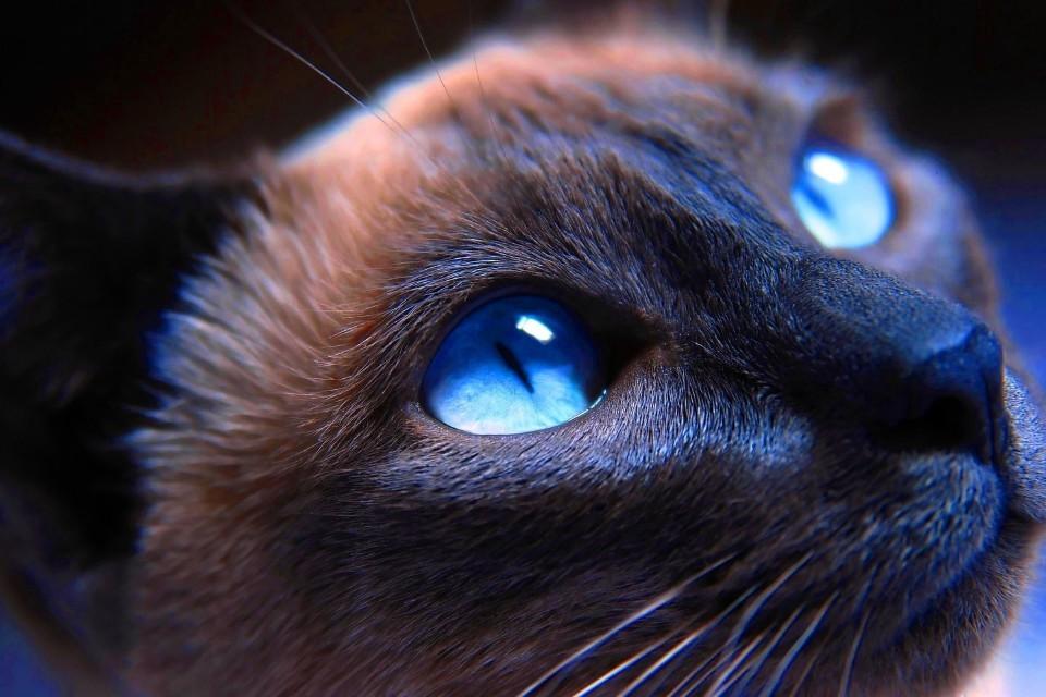 Действительно ли кошки видят в темноте, как днем