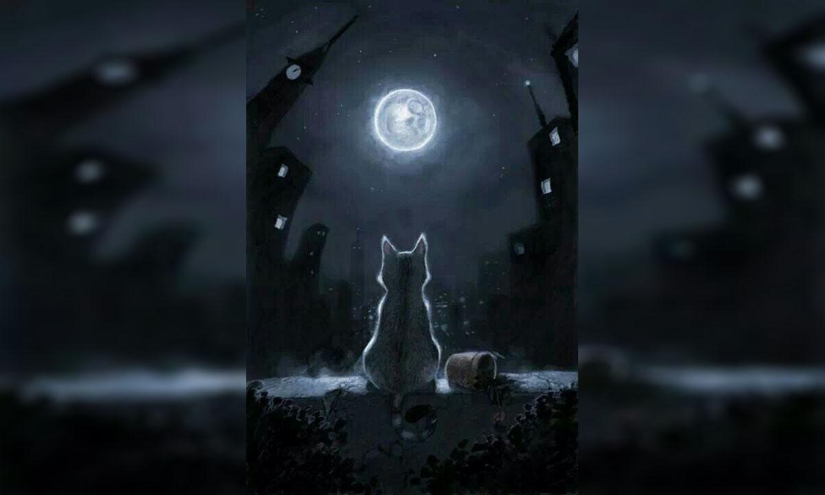 «Побитая кошка никому не нужна» мысли вслух